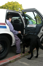 Guide Dog helping rider into East Bay Paratransit vehicle